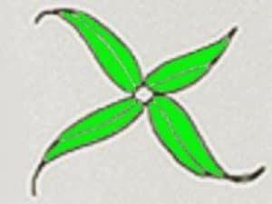 Verticillo completo di Egeria densa
