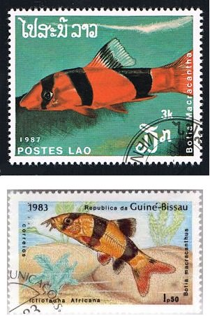 Francobolli del Laos e della Guinea Bissau dedicati al Chromobotia macracanthus