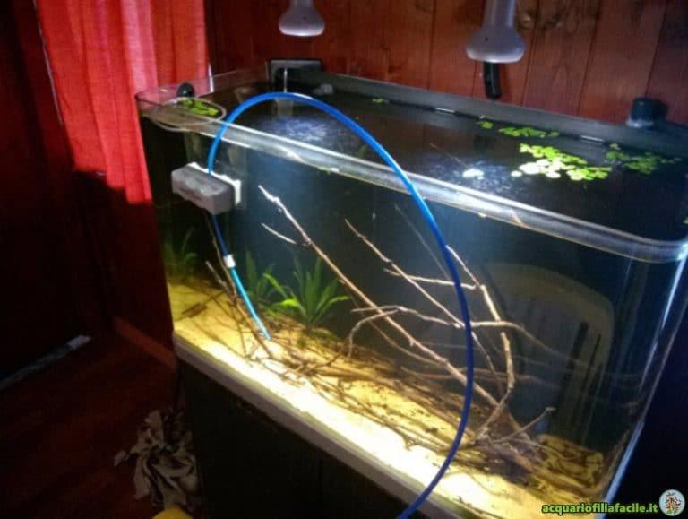 Acclimatazione pesci in acquario